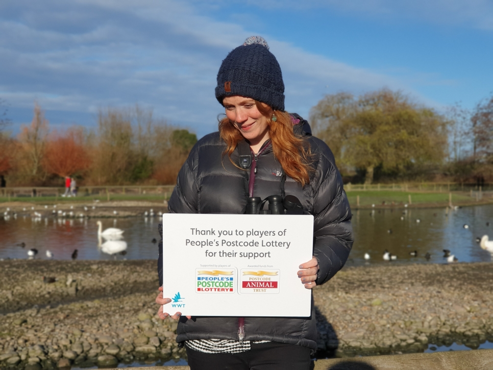 WWT's Julia Newth discusses science, swans and Slimbridge